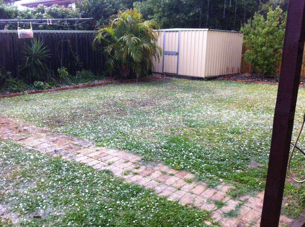 Hail with old veggie patch